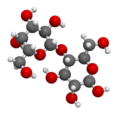 Lactose milk sugar molecule, chemical structure. Lactose is the disaccharide sugar found in milk. Atoms are represented as spheres with conventional color coding: hydrogen (white), carbon (grey), oxygen (red)