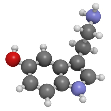 neurotransmitter: Serotonin neurotransmitter, molecular model. Serotonin is also known as 5-hydroxytryptamine (5-HT). Atoms are represented as spheres with conventional color coding: hydrogen (white), carbon (grey), oxygen (red), nitrogen (blue)