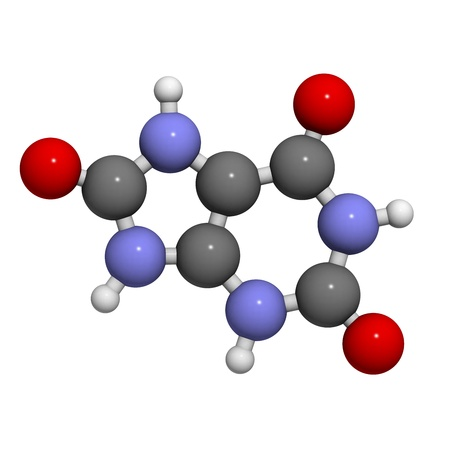 gout: Uric acid gout molecule, chemical structure. High blood levels of uric acid cause the disease gout. Atoms are represented as spheres with conventional color coding: hydrogen (white), carbon (grey), oxygen (red), nitrogen (blue)