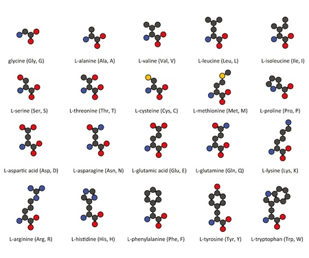Amino acids. 2D chemical structures of the 20 common amino acids found in proteins, with atoms represented as conventionally color-coded circles. Hydrogens omitted for clarity. Vector