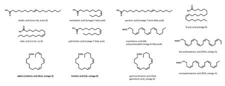 Onverzadigde vetzuren (set): elaidine, myristoleïne, vacceenzuur, erucazuur, oliezuur, palmitoleïne, arachidonzuur, alfa-linoleenzuur, gamma-linoleenzuur, linolzuur en eicosapentaeenzuur. Deze omvatten enkelvoudig en meervoudig onverzadigde vetzuren, alsmede cis en Stock Illustratie