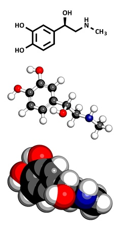 adrenalin: Adrenaline (epinephrine) hormone and neurotransmitter, molecular model. Atoms are represented as spheres with conventional color coding: hydrogen (white), carbon (grey), oxygen (red), nitrogen (blue)  Illustration