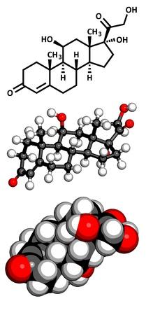 hipofisis: Cortisol (hidrocortisona), la hormona del estr�s, el modelo molecular. Los �tomos se representan como esferas con c�digo de colores convencionales: hidr�geno (blanco), el carb�n (gris), ox�geno (roja)