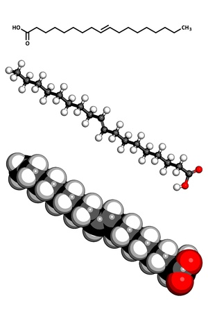 eg: Elaidic acid trans fatty acid, molecular model. Trans fatty acids are found in hydrogenated vegetable oils, and are used in the production of e.g. margarine. Atoms are represented as spheres with conventional color coding: hydrogen (white), carbon (grey),
