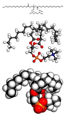 membrane cellulaire: La phosphatidylcholine bloc (PC) de la cellule � membrane de b�timent, le mod�le mol�culaire. PC est �galement le principal composant de la l�cithine. Les atomes sont repr�sent�s par des sph�res avec codage couleur conventionnels: l'hydrog�ne (blanc), le carbone (gris), d'oxyg�ne (rouge), le phosphore (orange), nitrog Illustration