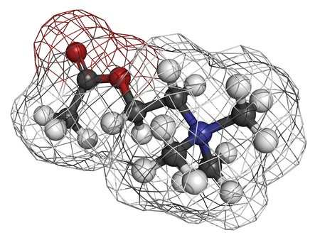 Acetylcholine (ACh) neurotransmitter, molecular model. Atoms are represented as spheres with conventional color coding: hydrogen (white), carbon (grey), oxygen (red), nitrogen (blue) Stock Photo - 19617706