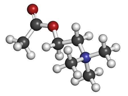 Acetylcholin (ACH) Neurotransmitter, molekulares Modell. Atome sind als Kugeln mit herkömmlichen Farbcodierung repräsentiert: Wasserstoff (weiß), Kohlenstoff (grau), Sauerstoff (rot), Stickstoff (blau) Standard-Bild - 19617570