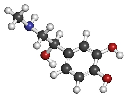 adrenaline: Adrenaline (epinephrine) hormone and neurotransmitter, molecular model. Atoms are represented as spheres with conventional color coding: hydrogen (white), carbon (grey), oxygen (red), nitrogen (blue) Stock Photo