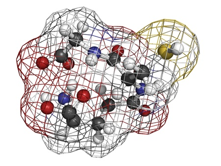 Glutathione antioxidant, molecular model. Atoms are represented as spheres with conventional color coding: hydrogen (white), carbon (grey), oxygen (red), nitrogen (blue), sulfur (yellow)
