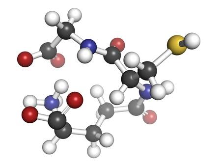 Glutathion Antioxidans, molekulares Modell. Atome sind als Kugeln mit herkömmlichen Farbcodierung repräsentiert: Wasserstoff (weiß), Kohlenstoff (grau), Sauerstoff (rot), Stickstoff (blau), Schwefel (gelb) Standard-Bild - 19617574