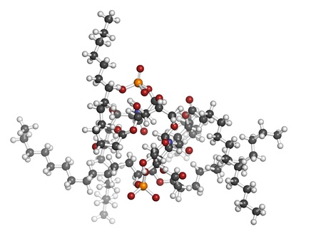 lipid: Lipid A bacterial endotoxin, molecular model. Atoms are represented as spheres with conventional color coding: hydrogen (white), carbon (grey), oxygen (red), phosphorus (orange) Stock Photo