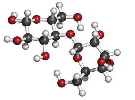 maltose: Maltose (maltobiose, malt sugar), molecular model. Atoms are represented as spheres with conventional color coding: hydrogen (white), carbon (grey), oxygen (red)
