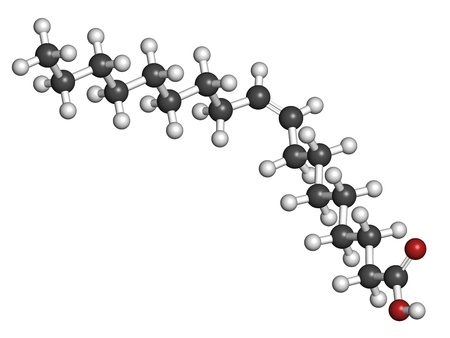 Oleic acid omega-9 fatty acid, molecular model. Oleic acid is the main fatty acid component of both olive oil and human body fat. Atoms are represented as spheres with conventional color coding: hydrogen (white), carbon (grey), oxygen (red)