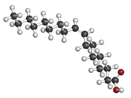 Oliezuur omega-9-vetzuur, moleculair model. Oliezuur is het belangrijkste vetzuur bestanddeel van zowel olijfolie en menselijk lichaamsvet. Atomen worden als bollen met conventionele kleurcodering vertegenwoordigd: waterstof (wit), koolstof (grijs), zuurstof (rood)