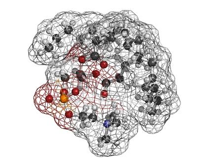 membrane cellulaire: La phosphatidylcholine bloc (PC) de la cellule � membrane de b�timent, le mod�le mol�culaire. PC est �galement le principal composant de la l�cithine. Les atomes sont repr�sent�s par des sph�res avec codage couleur conventionnels: l'hydrog�ne (blanc), le carbone (gris), d'oxyg�ne (rouge), le phosphore (orange), nitrog Banque d'images