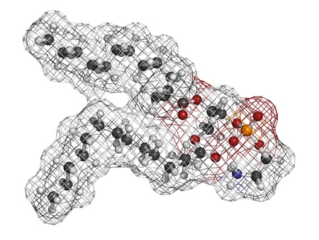 bl: Phosphatidylethanolamine (PE) cell membrane building block, molecular model. PE is also important in blood clotting (coagulation). Atoms are represented as spheres with conventional color coding: hydrogen (white), carbon (grey), oxygen (red), nitrogen (bl Stock Photo