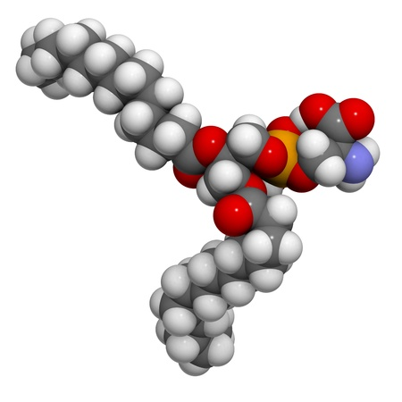 cell membrane: Phosphatidylserine (PS) cell membrane building block, molecular model. PS is also important in apoptosis (programmed cell death). Atoms are represented as spheres with conventional color coding: hydrogen (white), carbon (grey), oxygen (red), nitrogen (blu