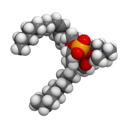 membrane cellulaire: Palmitoyloleoylphosphatidylcholine bloc (POPC) des cellules � membrane du b�timent, le mod�le mol�culaire. Les atomes sont repr�sent�s par des sph�res avec codage couleur conventionnels: l'hydrog�ne (blanc), le carbone (gris), d'oxyg�ne (rouge), l'azote (en bleu), le phosphore (orange). Banque d'images