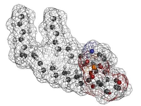 membrane cellulaire: Palmitoyloleoylphosphatidylethanolamine bloc (POPE) des cellules � membrane du b�timent, le mod�le mol�culaire. PE est �galement important dans la coagulation du sang (coagulation). Les atomes sont repr�sent�s par des sph�res avec codage couleur conventionnels: l'hydrog�ne (blanc), le carbone (gris), d'oxyg�ne (r Banque d'images