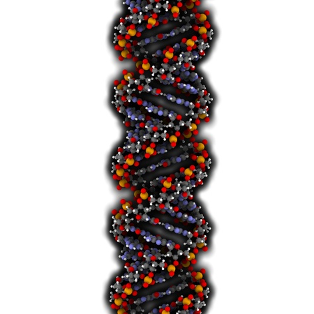 nucleic acid: DNA (A-DNA conformation) structure. DNA is the main carrier of genetic information in all organisms. The DNA shown here is in the rare and possible non-native A conformation. Atoms are represented as spheres with conventional color coding: hydrogen (white