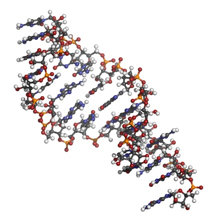 Micro RNA (miRNA, hsa-miR-133a) structure, computer model. MiRNA is non-coding RNA that has gene regulatory functions and plays a role in several diseases. Atoms are represented as spheres with conventional color coding: hydrogen (white), carbon (grey), o Stockfoto