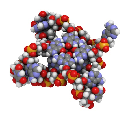 senescence: Telomere: structure of human telomeric DNA. Atoms are represented as spheres with conventional color coding: hydrogen (white), carbon (grey), oxygen (red), nitrogen (blue), phosphorus (orange). Stock Photo
