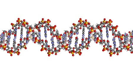 DNA structure. Computer model of part of the gene for human growth hormone, shown in the B-DNA form. Atoms are represented as spheres with conventional color coding: hydrogen (white), carbon (grey), oxygen (red), nitrogen (blue), phosphorus (orange). Stock Photo