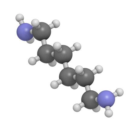 monomer: Hexametilendiamina, nylon (poliamida) bloque de construcci�n. Los �tomos se representan como esferas con c�digo de colores convencionales: hidr�geno (blanco), el carb�n (gris), nitr�geno (azul).