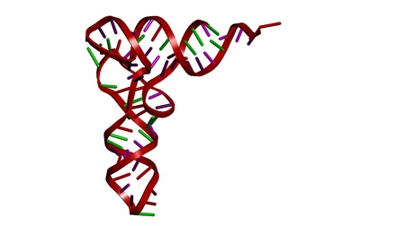 Transfer RNA (tRNA, phenylalanyl-tRNA) molecule from yeast, crystal structure. Cartoon representation.