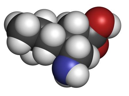 convulsion: Epilepsia Pregabalina y fibromialgia drogas, la estructura qu�mica. Los �tomos se representan como esferas con c�digo de colores convencionales: hidr�geno (blanco), el carb�n (gris), nitr�geno (azul), el ox�geno (roja).