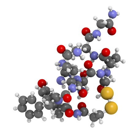 sulphur: Desmopressin peptide, synthetic replacement of vasopressin hormone, chemical structure. Used in treatment of bedwetting. Atoms are represented as spheres with conventional color coding: hydrogen (white), carbon (grey), oxygen (red), nitrogen (blue), sulfu