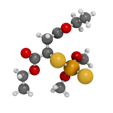 piojos: Insecticida malati�n, la estructura qu�mica. Se utiliza para tratar los piojos de la cabeza, piojos del cuerpo, la sarna y en la agricultura. Los �tomos se representan como esferas con c�digo de colores convencionales: hidr�geno (blanco), f�sforo, carbono (gris), ox�geno (roja), azufre (amarillo), (naranja) Foto de archivo