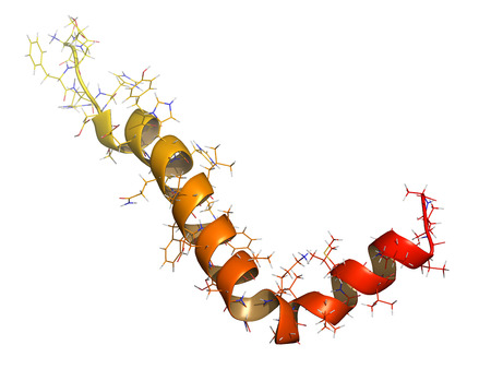 Beta-amyloid (Abeta) peptide, chemical structure. Major component of plaques found in Alzheimers disease. Shown as cartoon + wireframe. N-term (yellow) to C-term (red) gradient coloring. Stock Photo