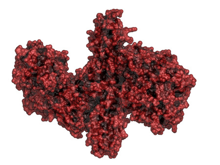 toxin: Botulinum toxin neurotoxic protein. Produced by Clostridium botulinum. Cosmetically used to treat wrinkles. Cartoon & stick view combined with semi-transparent molecular surface.