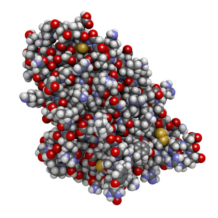 hematopoietic: Erythropoietin (EPO, epoetin) protein hormone. Stimulates production of red blood cells. Used as drug and in sports doping. Atoms are represented as spheres with conventional color coding: hydrogen (white), carbon (grey), nitrogen (blue), oxygen (red), su