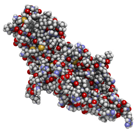 glycoprotein: Human Chorionic Gonadotropin (hCG) glycoprotein hormone, chemical structure. Used in fertility treatments and in vitro fertilization. Detected in pregnancy tests. Atoms are represented as spheres with conventional color coding: hydrogen (white), carbon (g Stock Photo