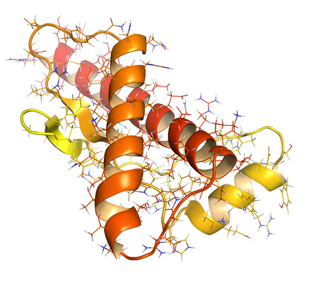 protein structure: Human prion protein (hPrP), chemical structure. Associated with neurogedenerative diseases, including kuru, BSE and Creutzfeldt-Jakob. Cartoon & wireframe representation. N-term (yellow) to C-term (red) gradient coloring.