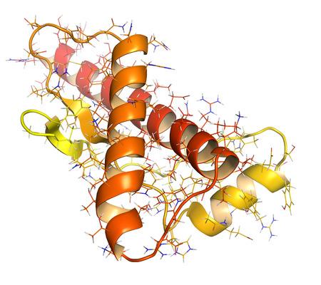conformation: Prote�na pri�nica humana (HPRP), la estructura qu�mica. Asociado con enfermedades neurogedenerative, como kuru, la EEB y la enfermedad de Creutzfeldt-Jakob. Dibujos animados y representaci�n al�mbrica. N-t�rmino (amarillo) a (rojo) color degradado C plazo. Foto de archivo