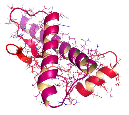 encephalopathy: Human prion protein (hPrP), chemical structure. Associated with neurogedenerative diseases, including kuru, BSE and Creutzfeldt-Jakob. Cartoon & wireframe representation. N-term (red) to C-term (magenta) gradient coloring.