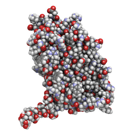 Interferon beta molecule, chemical structure. Cytokine used to treat multiple sclerosis (MS). Atoms are represented as spheres with conventional color coding: hydrogen (white), carbon (grey), nitrogen (blue), oxygen (red), sulfur (yellow).