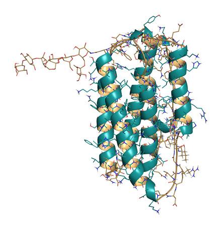 cytokine: Interferon beta molecule, chemical structure. Cytokine used to treat multiple sclerosis (MS). Cartoon & wireframe representation.
