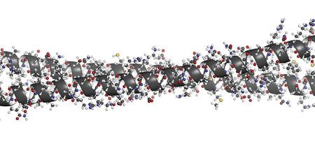Keratin Intermediärfilament, chemische Struktur. Keratin ist einer der Hauptbestandteile der menschlichen Haut, Haare und Nägel. Wasserstoff (weiß), Kohlenstoff (grau), Stickstoff (blau), Sauerstoff (rot), Schwefel: Atome sind als Kugeln mit herkömmlichen Farbcodierung dargestellt Standard-Bild - 22802651