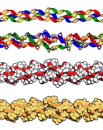 Collageen type eiwit, chemische structuur (detail). Essentieel onderdeel van de huid, botten, haar, bindweefsel, etc. Meerdere representaties.