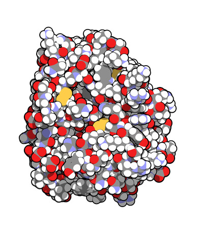 fibrosis: Trypsin digestive enzyme molecule (human). Enzyme that contributes to the digestion of proteins in the digestive system. All atoms shown as conventionally colored spheres.