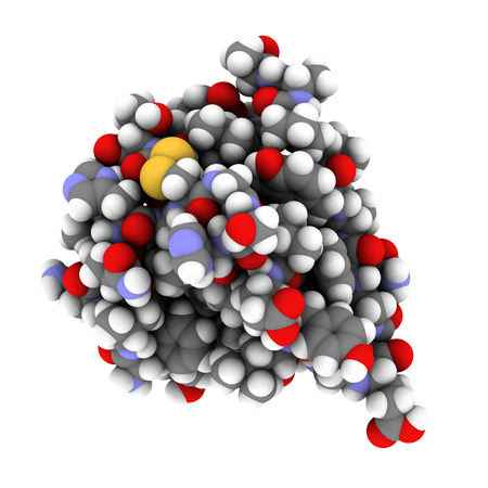 Insulin peptide hormone, chemical structure. Important drug in treatment of diabetes. Shown in het monomeric form. Atoms are represented as spheres with conventional color coding: hydrogen (white), carbon (grey), nitrogen (blue), oxygen (red), sulfur (yel