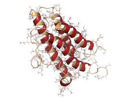 hematopoietic: Erythropoietin (EPO, epoetin) protein hormone. Stimulates production of red blood cells. Used as drug and in sports doping. Combined cartoon and wireframe representation.