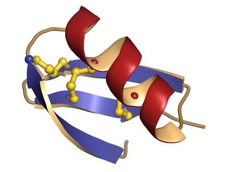 disulfide: Agitoxin scorpion toxin. Neurotoxin present in deathstalker scorpion venom. Blocks Shaker potassium channels. Cartoon representation. Secondary structure coloring. Disulfide bridge shown.