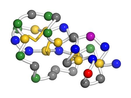 disulfide: Agitoxin scorpion toxin. Neurotoxin present in deathstalker scorpion venom. Blocks Shaker potassium channels. Pearls on a string representation. Residue coloring: red (Glu, Asp), blue (Lys, Arg, His), gold (Met, Cys), green (Asn, Gln, Ser, Thr), violet  (