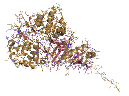 metformin: AMP-activated protein kinase (AMPK) fragment with AMP bound. AMPK regulates cellular metabolism depending on energy availability. Cartoon & wire representation. Secondary structure coloring.