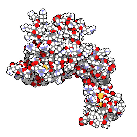 sepsis: Human activated protein C (APC, drotrecogin alfa, without Gla-domain). Has anti-thrombotic and anti-inflammatory properties. Used to treat sepsis (obsolete). Atoms shown as spheres with conventional color coding: hydrogen (white), carbon (grey), oxygen (r Stock Photo